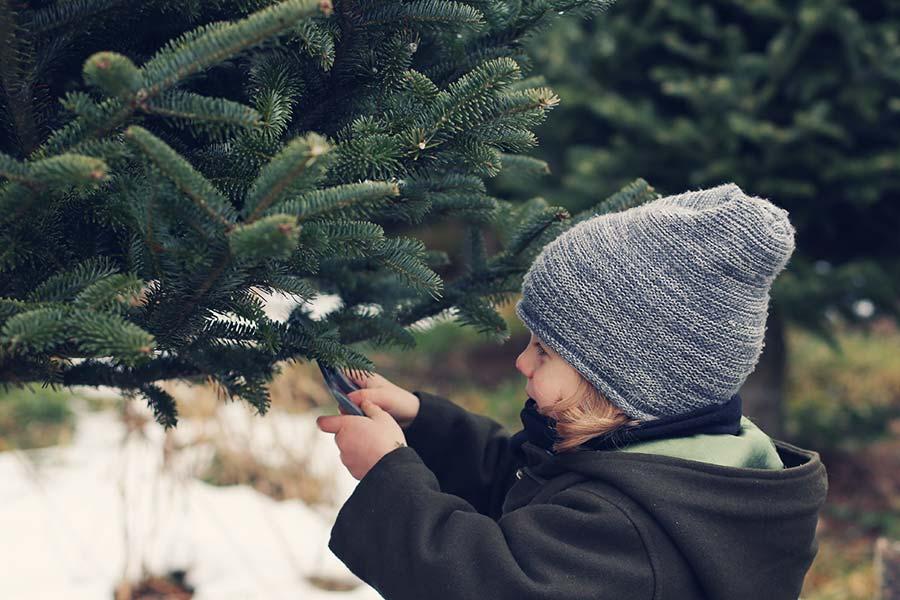 Choisissez votre sapin de Noël